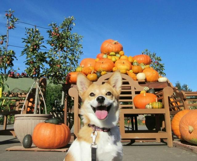 かぼちゃの馬車問題に見る不動産投資失敗の要因